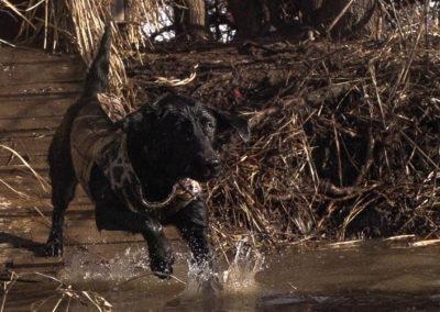 dog water ramp (1 of 1)